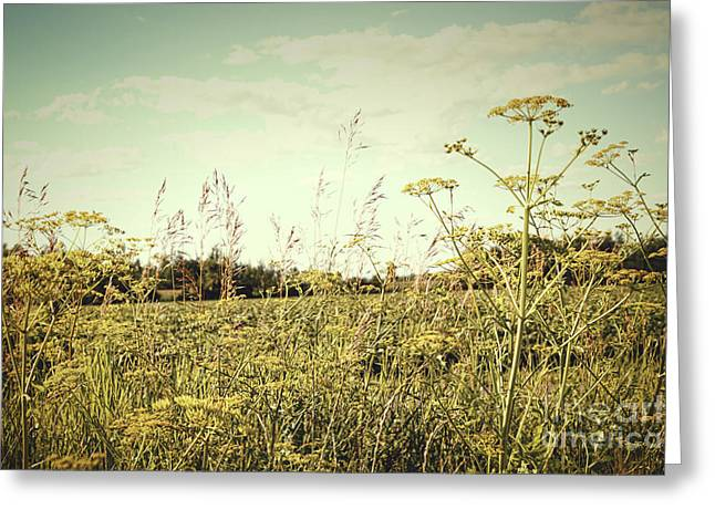 Beautiful Scenery Greeting Cards - Field of wild dill in the afternoon sun  Greeting Card by Sandra Cunningham