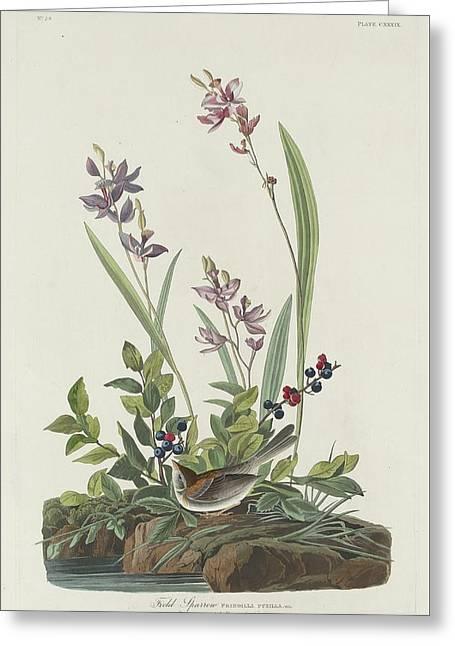 Sparrow Greeting Cards - Field Sparrow Greeting Card by John James Audubon