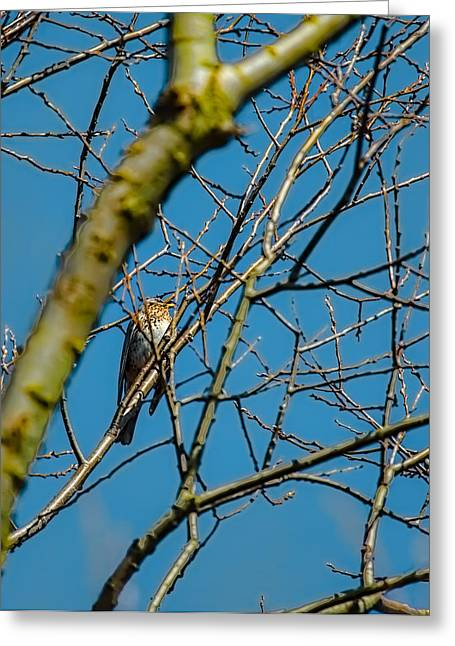 Sit-ins Greeting Cards - Fieldfare sitting in a tree Greeting Card by Leif Sohlman