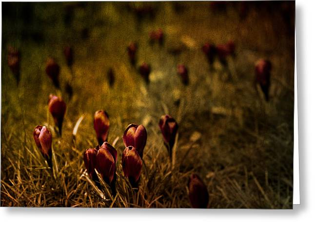Loriental Greeting Cards - Fields of Elegance Greeting Card by Loriental Photography