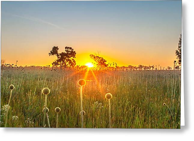 Dusk Greeting Cards - Fields Of Gold Panorama Greeting Card by Az Jackson