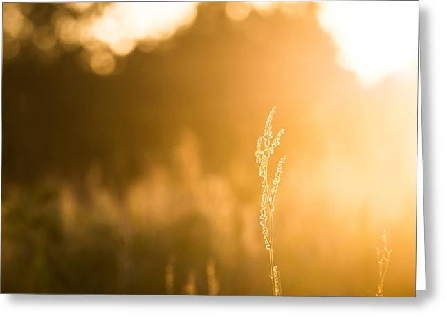 Harvest Art Greeting Cards - Fields of Gold Greeting Card by Shelby  Young