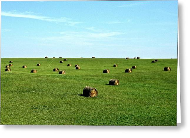 Fields Of Green Greeting Card by Mark Mickelsen