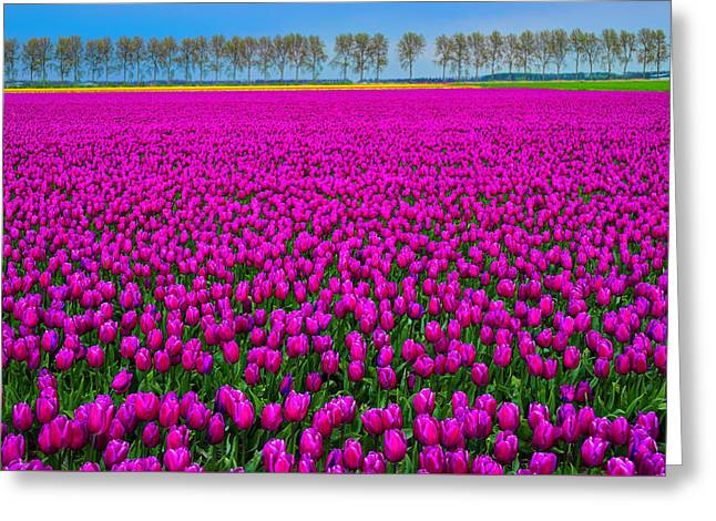 Tulip Tree Greeting Cards - Fields of Pink Greeting Card by Midori Chan