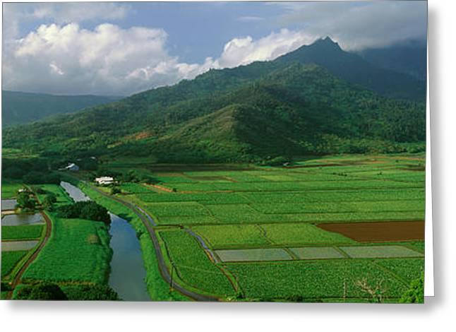 Fields Of Taro, Hanalei Valley Greeting Card by Panoramic Images