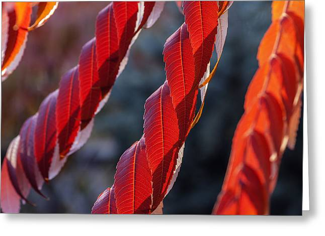 Red Abstracts Greeting Cards - Fiery autumn abstract Greeting Card by Vishwanath Bhat