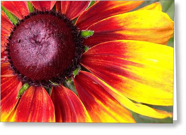 Charlotte Greeting Cards - Fiery Flower Greeting Card by Morgan Carter