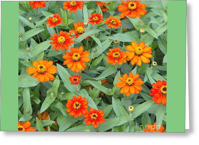 Square Format Greeting Cards - Fiery Flowerbed Greeting Card by Ann Horn