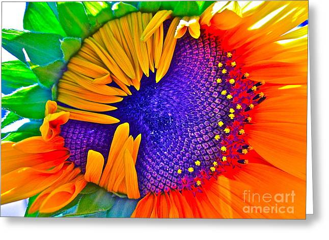 Nature Photographs Greeting Cards - Fiesta Greeting Card by Gwyn Newcombe