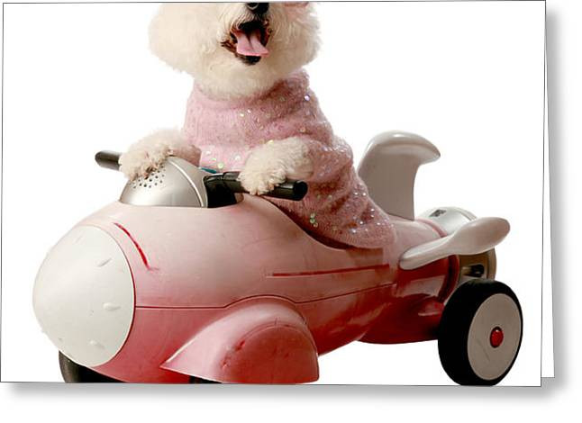 Fifi is ready for take off  Greeting Card by Michael Ledray
