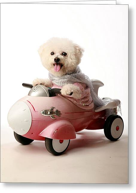 Family Member Greeting Cards - Fifi the Bichon Frise and her Rocket Car Greeting Card by Michael Ledray