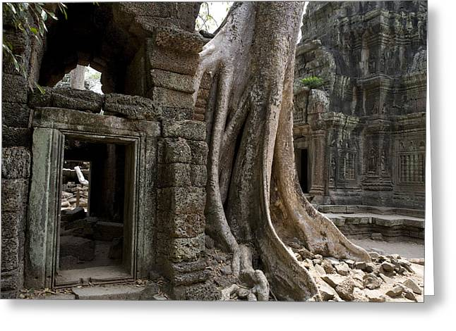 Tree Roots Photographs Greeting Cards - Fig Tree Growing Over Crumbling Ruins Greeting Card by Rebecca Hale