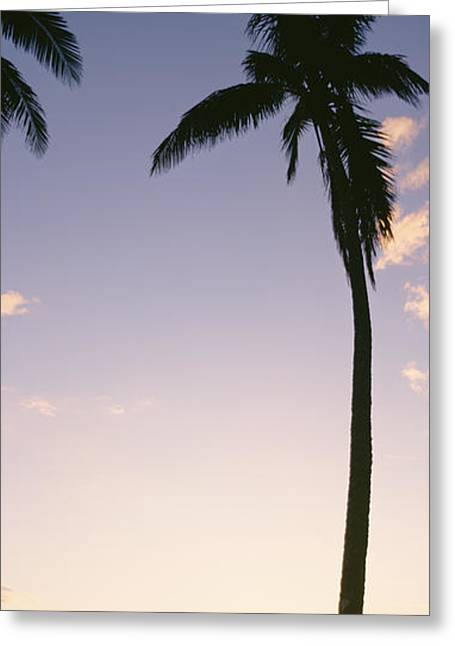 Backlit Greeting Cards - Fiji Palm Silhouettes Greeting Card by Bill Schildge - Printscapes