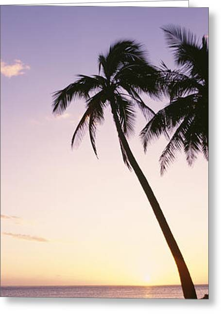 Backlit Greeting Cards - Fiji Palm Silhouettes II Greeting Card by Bill Schildge - Printscapes