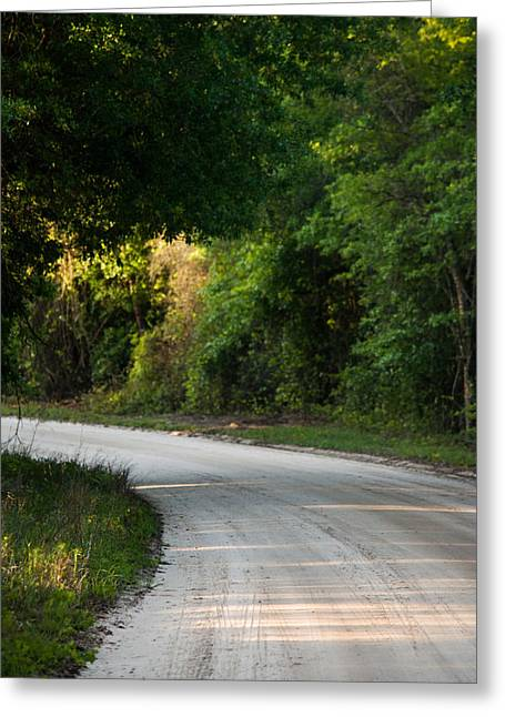 Jogging Greeting Cards - Filtering Sunlight Greeting Card by Parker Cunningham