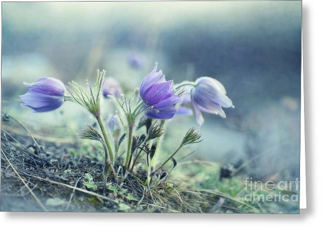 Crocus Greeting Cards - Finally Spring Greeting Card by Priska Wettstein