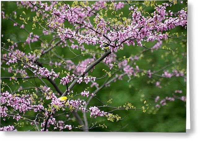 Finches Among The Buds Greeting Card by David Bearden