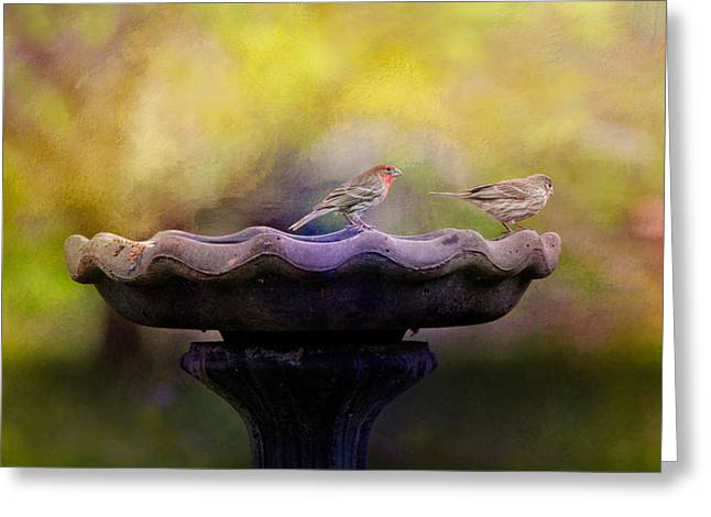 House Finch Greeting Cards - Finches On The Bird Bath Greeting Card by Jai Johnson