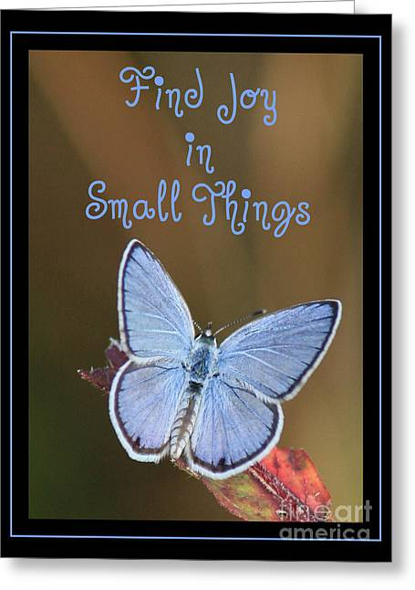 Inspirational Cards Greeting Cards - Find Joy in Small Things Greeting Card by Carol Groenen