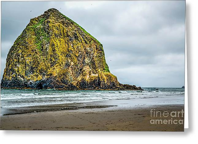 Find The Needle Greeting Card by Jon Burch Photography