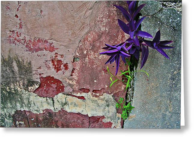 Abstract Digital Photographs Greeting Cards - Finding Beauty Everywhere Greeting Card by Elizabeth Hoskinson
