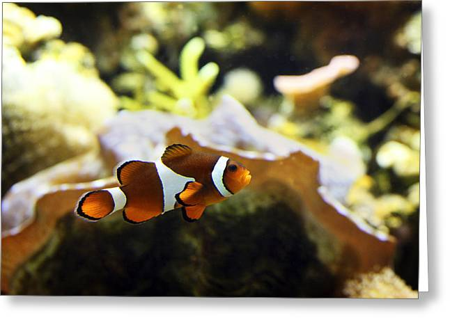 Nemo Greeting Cards - Finding Nemo Greeting Card by Marilyn Hunt