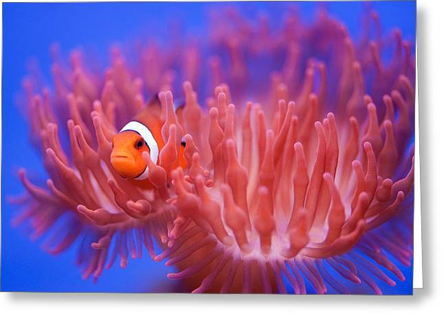 Nemo Greeting Cards - Finding Nemo Greeting Card by Wendy