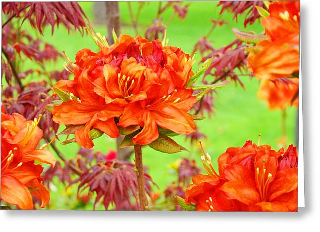 Rhodie Greeting Cards - Fine Art Floral Art Prints Canvas Orange Rhodies Baslee Troutman Greeting Card by Baslee Troutman