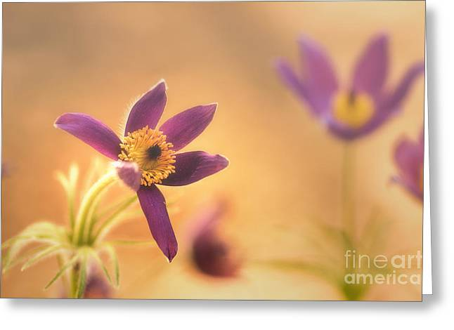 Buero Greeting Cards - Fine Flower in Detail Greeting Card by Tanja Riedel