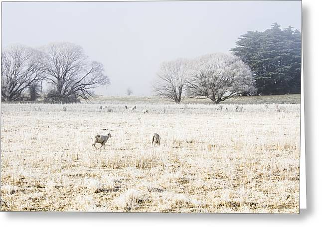 Fingal Winter Farmyard Greeting Card by Jorgo Photography - Wall Art Gallery
