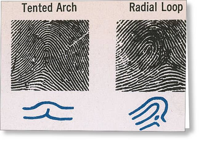 Analyzing Greeting Cards - Fingerprint Patterns Greeting Card by Photo Researchers