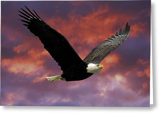 Eagles Greeting Cards - Fire Cloud and Eagle Greeting Card by Clarence Alford