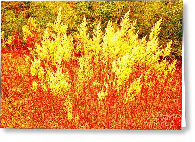 Landscape Glass Greeting Cards - Fire Dances Greeting Card by Chuck Taylor