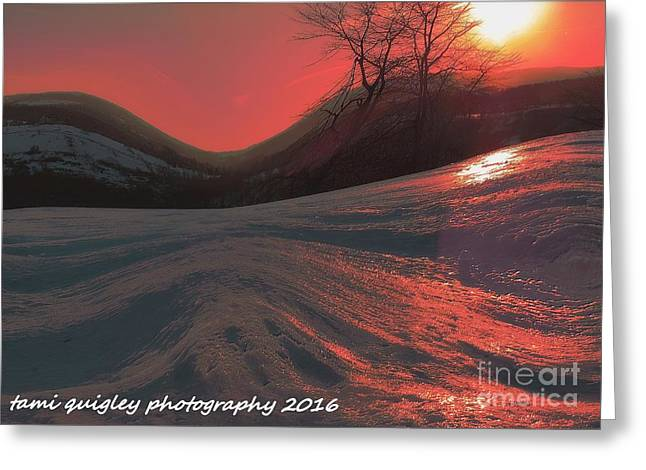 Fire Frost Greeting Card by Tami Quigley
