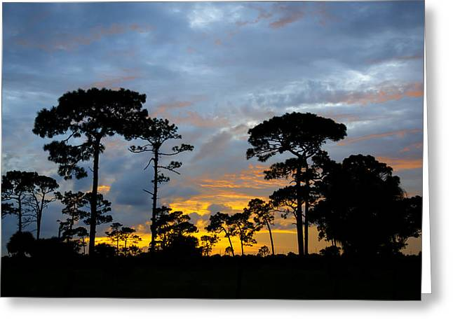 Nature Greeting Cards - Fire In The Sky Greeting Card by Louise Hill