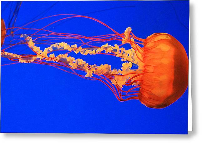 Jelly Fish Greeting Cards - Fire In Water Greeting Card by Iryna Burkova