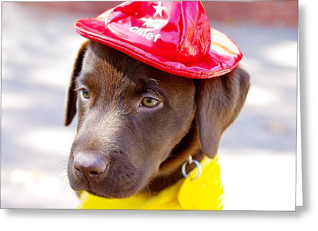 Shower Curtain Photographs Greeting Cards - Firefighter Pup Greeting Card by Toni Hopper