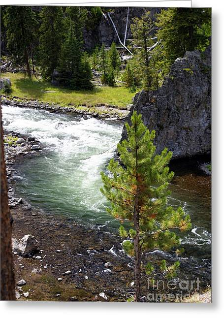 Firehole Fin Greeting Card by Marty Koch