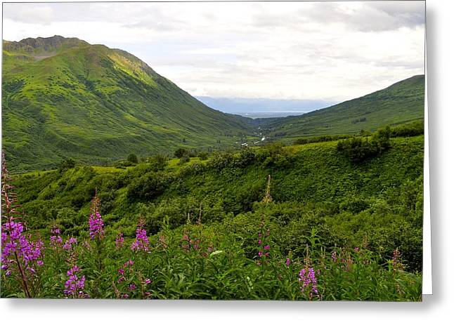Mountain Road Greeting Cards - Fireweed in Hatcher Pass Greeting Card by Cathy Mahnke