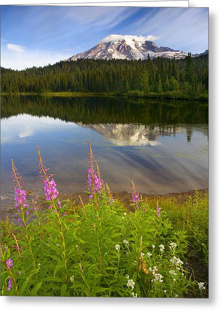 Cap Photographs Greeting Cards - Fireweed Reflections Greeting Card by Mike  Dawson