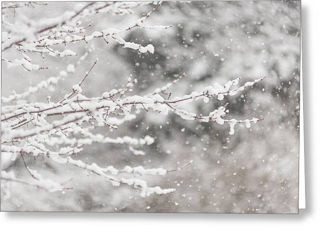Snow Tree Prints Greeting Cards - First Day of Spring 2015 New Jersey Greeting Card by Terry DeLuco