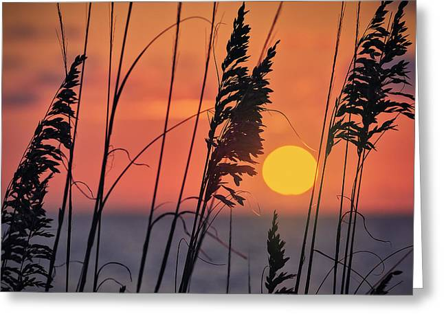 Surf Silhouette Digital Art Greeting Cards - First light Greeting Card by Eduard Moldoveanu