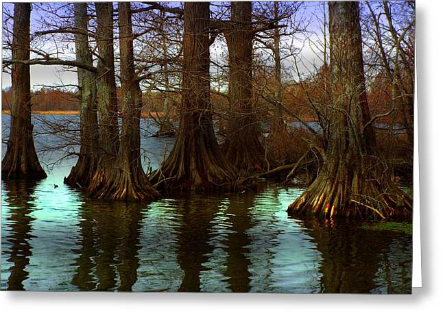 First Rays At Reelfoot Greeting Card by Julie Dant
