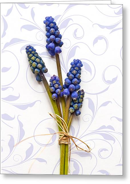 Blue Grapes Greeting Cards - First Sign of Spring Greeting Card by Maggie Terlecki