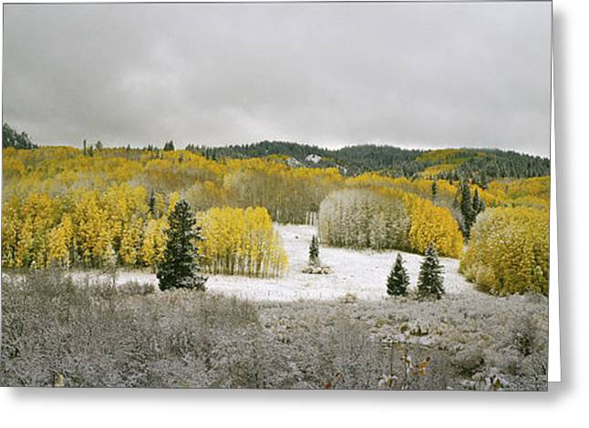 Winter Storm Greeting Cards - First Snow Panorama Greeting Card by Dusty Demerson