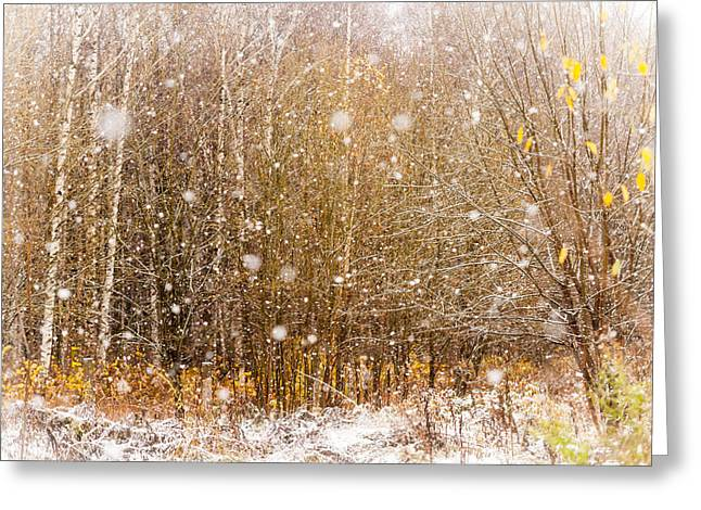 First Snow. Snow Flakes I Greeting Card by Jenny Rainbow