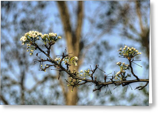 Maine Spring Digital Greeting Cards - First Spring Greeting Card by Patrick Groleau