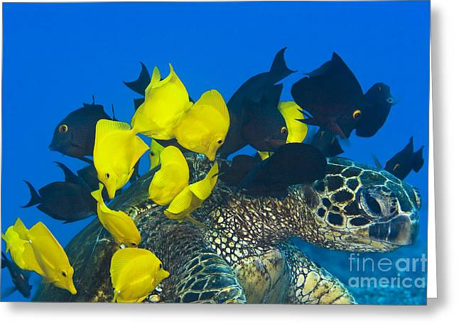 Fish cleaning turtle Greeting Card by Dave Fleetham - Printscapes