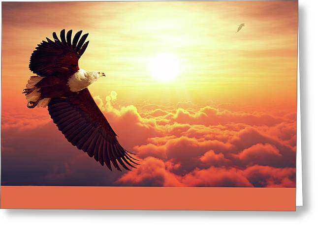 Cloudscape Greeting Cards - Fish Eagle flying above clouds Greeting Card by Johan Swanepoel