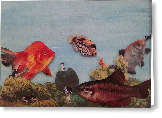 To Be Normal Greeting Cards - Fish eating cats. Greeting Card by William Douglas